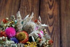 kwiat wysuszone rośliny zdjęcia stock