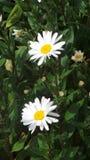 Kwiat wziąć w arboretum Nottingham UK Obrazy Royalty Free