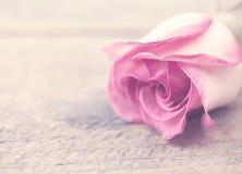 Kwiat Wzrastał na nieociosanym drewnianym tle Kartka z pozdrowieniami z f zdjęcia stock