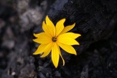 Kwiat życie Fotografia Royalty Free