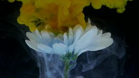 Kwiat z atramentu abstrakta tłem Fotografia Royalty Free