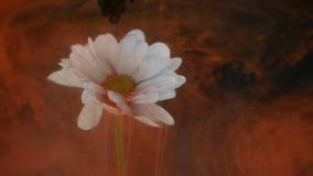 Kwiat z atramentu abstrakta tłem Zdjęcie Stock