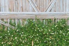 Kwiat z bambusowym tłem Zdjęcie Royalty Free