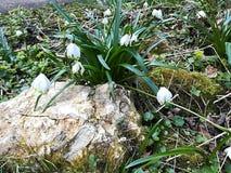 Kwiat z kamiennym wiosny natury słońcem obraz royalty free