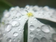 Kwiat z kropelkami Obraz Royalty Free
