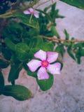 Kwiat z kroplami na swój liściach zdjęcie royalty free
