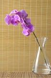 Kwiat z matą obraz royalty free