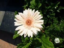 Kwiat z pszczołą Obrazy Royalty Free