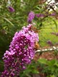 Kwiat z zwierzęciem troszkę obraz stock