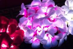 Kwiat zaświeca jarzyć się ciepło w zmroku w wysokim kontrascie z c zdjęcie stock