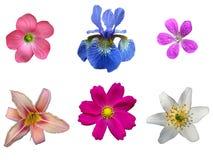 kwiat zestaw Zdjęcie Royalty Free