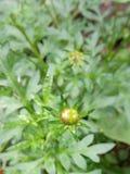 Kwiat zieleń zdjęcia stock