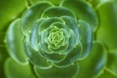 kwiat zieleń Zdjęcie Royalty Free