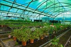 Kwiat zielona domowa storczykowa pepiniera Fotografia Royalty Free