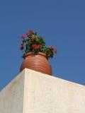 kwiat zioło zdjęcie stock