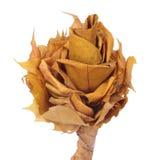 Kwiat zrobił ââof jesień liść Obrazy Stock