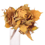 Kwiat zrobił ââof jesień liść Obrazy Royalty Free