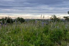 Kwiatonośna łąka, śródpolna trawa na pięknym nieba tle Obrazy Royalty Free