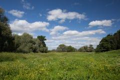Kwiatonośna łąka Zdjęcia Stock