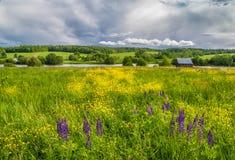 Kwiatonośna łąka Obrazy Royalty Free