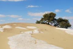 Kwiatonośna akacja w Sahara, Egipt fotografia stock