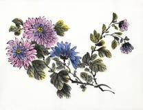 Kwiatonośna gałąź chryzantema Royalty Ilustracja