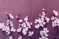Kwiatonośna gałąź morela na tkaninie Fotografia Stock