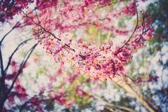 Kwiatonośna roślina zdjęcia stock