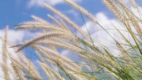 kwiatonośna trawa Obrazy Royalty Free