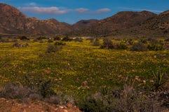 Kwiatonośne łąki w Cabo De Cata Obraz Stock