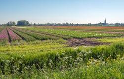 Kwiatonośne dzikie rośliny i trawy w przedpolu landsca obraz stock