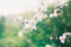 Kwiatonośne morele z przestrzenią dla teksta pojęcia Obraz Royalty Free