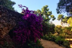 Kwiatonośne rośliny zdjęcie stock