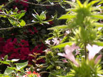 Kwiatonośne rośliny jarzy się w świetle słonecznym zdjęcia stock