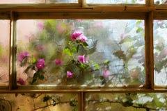Kwiatonośnego bougainvillea pięcia ornamentacyjna roślina Zdjęcie Royalty Free