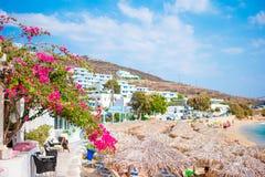 Kwiatonośny bougainvillea na plaży przeciw morzu śródziemnomorskiemu w Grecja Zdjęcie Royalty Free