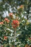 Kwiatonośny drzewo Gałąź drzewo z czerwieni zielenią i kwiatami opuszcza na słonecznym dniu Obrazy Stock