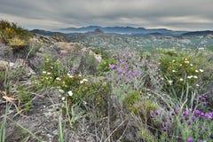 Kwiatonośny Korsykański nabrzeżny pustyni des Agriates Fotografia Royalty Free