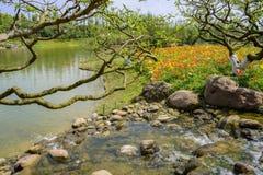 Kwiatonośny nadbrzeżny w pogodnym wiosny popołudniu Obraz Stock