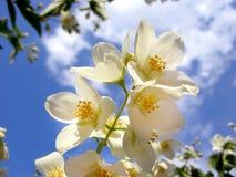 Kwiatonośny niebo fotografia royalty free