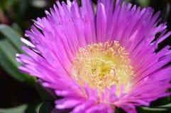 Kwiatonośny piękno Obrazy Royalty Free