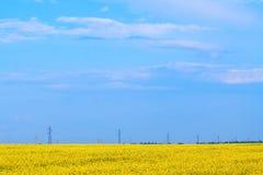 Kwiatonośny pole, daleki widzii linię energetyczną Fotografia Stock