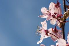 Kwiatonośny sezon Fotografia Royalty Free