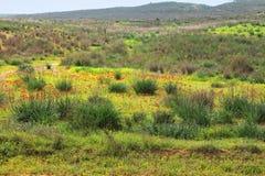Kwiatonośna pustynia Fotografia Royalty Free