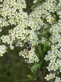 Kwiatonośna trawa pole Obraz Stock