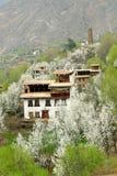 kwiatonośna wiosna zdjęcie royalty free