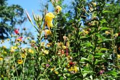 Kwiatonośni ziele Obrazy Royalty Free