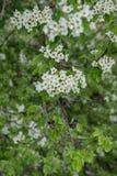 Kwiatonośny czas Zdjęcie Stock