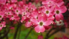 Kwiatonośny drzewo Zdjęcie Royalty Free