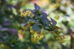 Kwiatonośny drzewo Obraz Stock